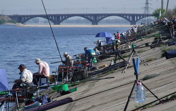 15-лучших-рыболовных-мест-Воронежской-области-Платные-и-бесплатные-8