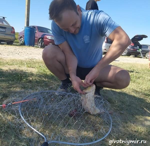 Рыбалка-в-августе-на-голого-(кожистого)-карпа-Платный-водоём-3