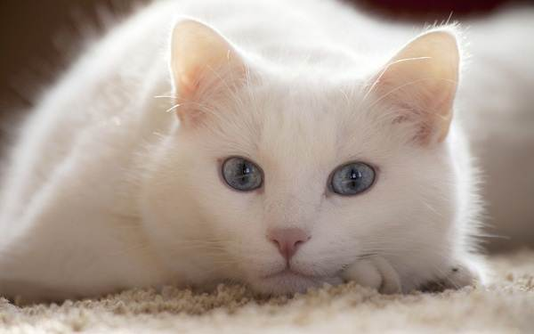 Советы-ветеринара-как-оставить-кошку-одну-дома-на-несколько-дней-без-вреда-здоровью-1