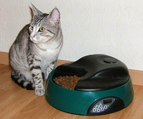 Советы-ветеринара-как-оставить-кошку-одну-дома-на-несколько-дней-без-вреда-здоровью-2