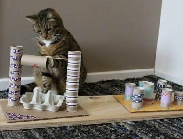 Советы-ветеринара-как-оставить-кошку-одну-дома-на-несколько-дней-без-вреда-здоровью-4