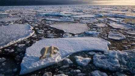 Экологические проблемы Арктики и пути их решения