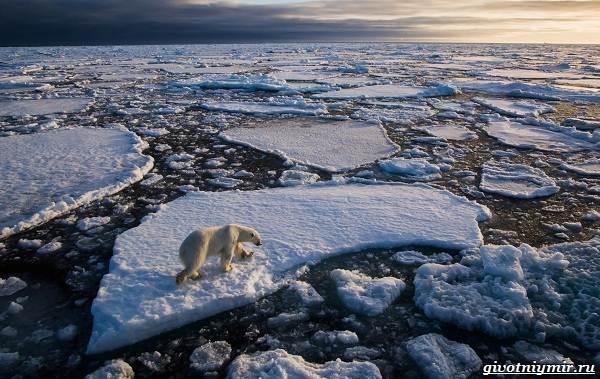 Экологические-проблемы-Арктики-и-пути-их-решения-1