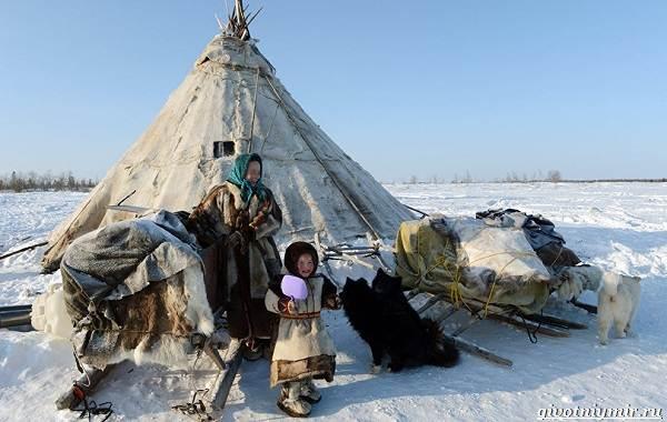 Экологические-проблемы-Арктики-и-пути-их-решения-11