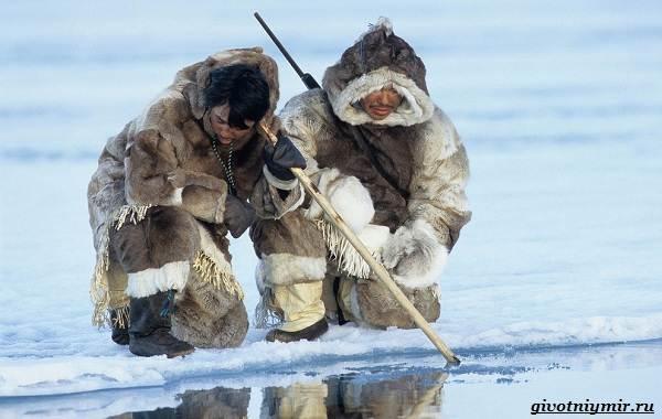 Экологические-проблемы-Арктики-и-пути-их-решения-12