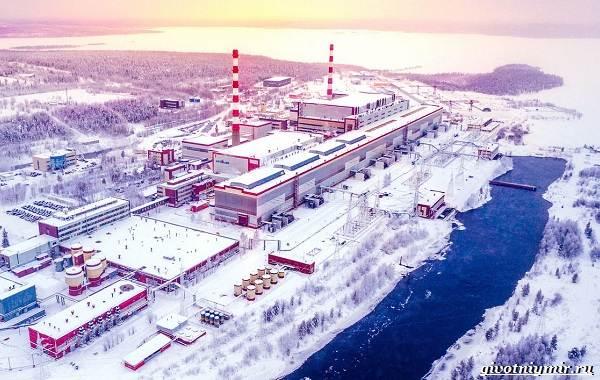 Экологические-проблемы-Арктики-и-пути-их-решения-13