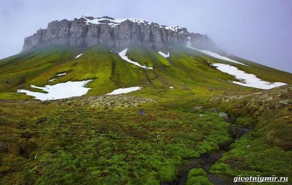 Экологические-проблемы-Арктики-и-пути-их-решения-14