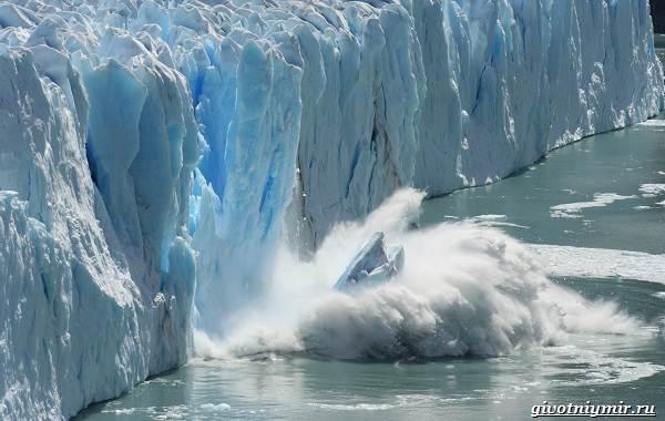 Экологические-проблемы-Арктики-и-пути-их-решения-5