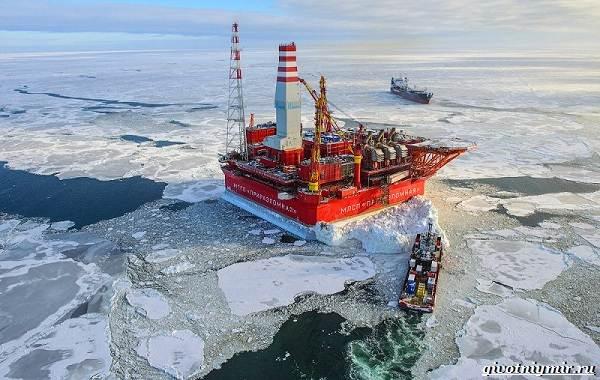 Экологические-проблемы-Арктики-и-пути-их-решения-6