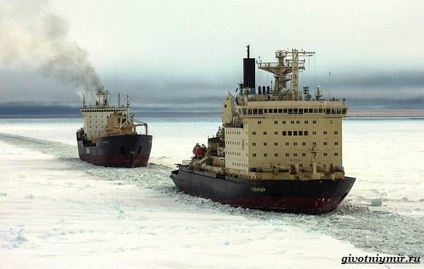 Экологические-проблемы-Арктики-и-пути-их-решения-7