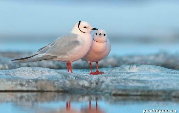 Экологические-проблемы-Арктики-и-пути-их-решения-8