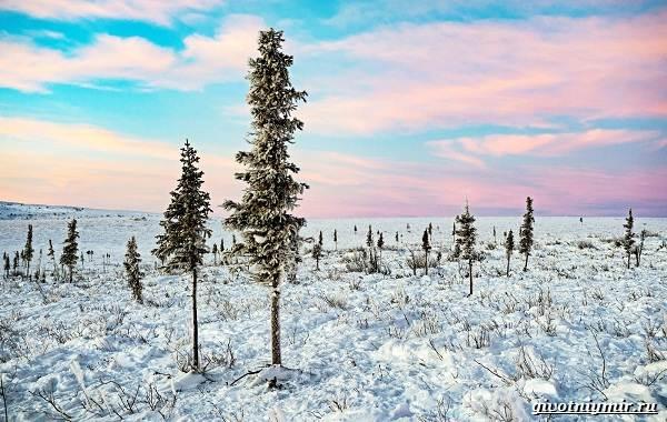 Экологические-проблемы-Арктики-и-пути-их-решения-9