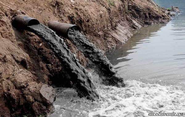 Экологические-проблемы-Крыма-и-пути-их-решения-5