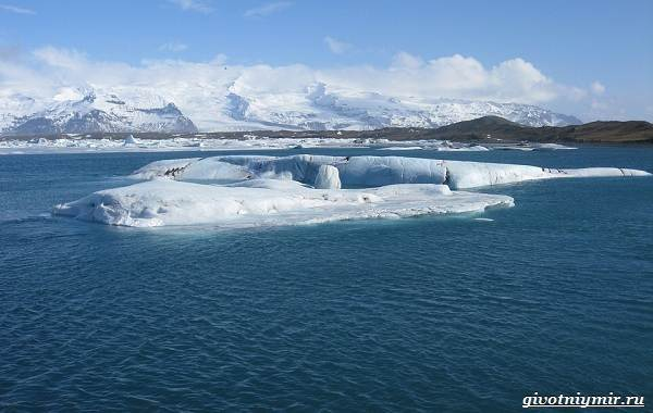 Экологические-проблемы-Северного-Ледовитого-океана-1
