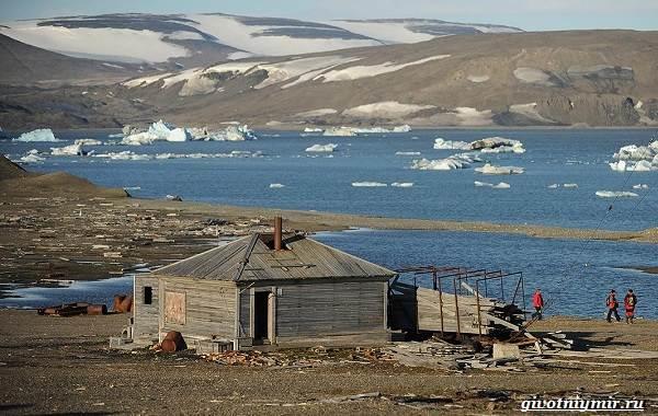 Экологические-проблемы-Северного-Ледовитого-океана-10