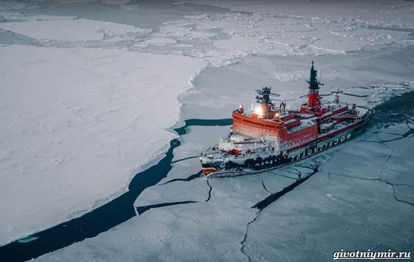 Экологические-проблемы-Северного-Ледовитого-океана-11
