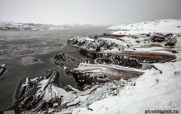 Экологические-проблемы-Северного-Ледовитого-океана-12