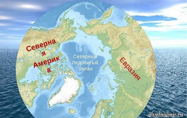 Экологические-проблемы-Северного-Ледовитого-океана-2