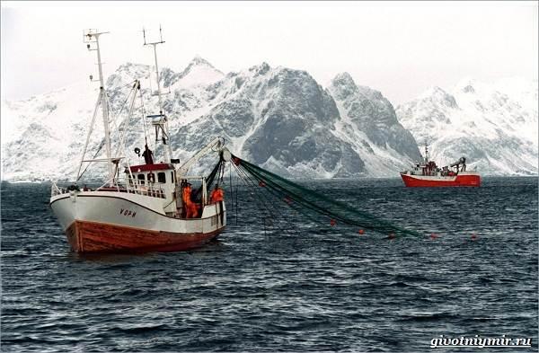Экологические-проблемы-Северного-Ледовитого-океана-3
