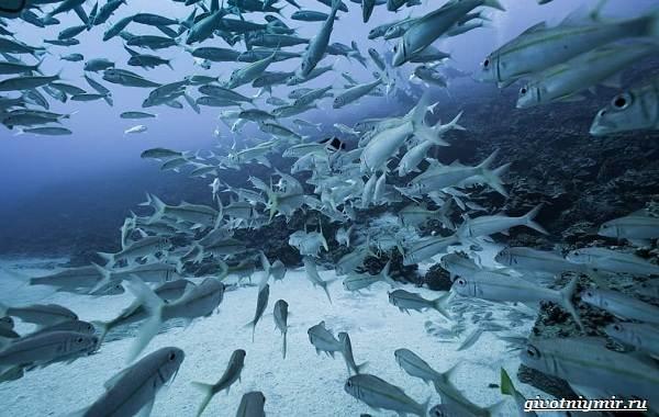 Экологические-проблемы-Северного-Ледовитого-океана-4