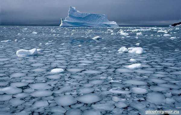 Экологические-проблемы-Северного-Ледовитого-океана-5