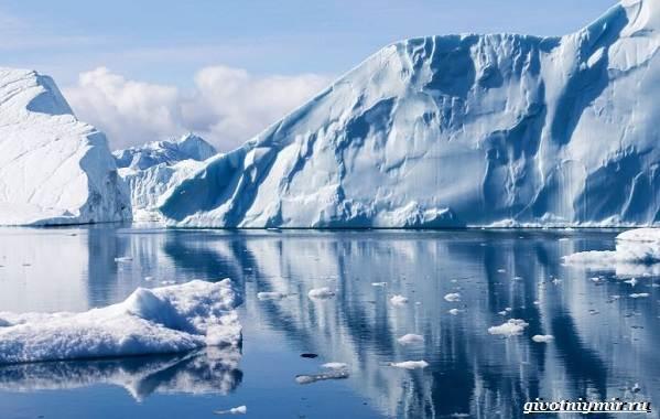 Экологические-проблемы-Северного-Ледовитого-океана-6