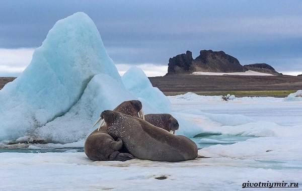 Экологические-проблемы-Северного-Ледовитого-океана-8