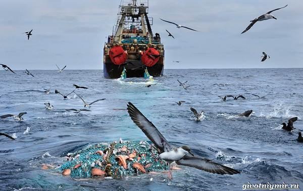 Экологические-проблемы-Северного-Ледовитого-океана-9