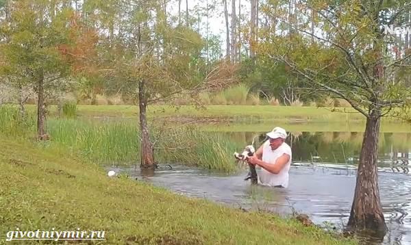 История-о-том-как-мужчина-спас-щенка-вырвав-его-из-пасти-крокодила-2