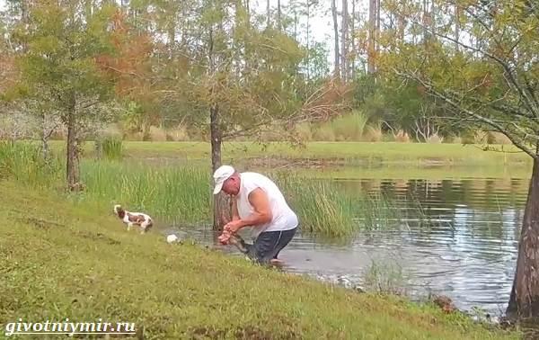 История-о-том-как-мужчина-спас-щенка-вырвав-его-из-пасти-крокодила-6
