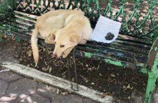 История о том, как на скамейке сидел бездомный пёс, а рядом – трогательная записка