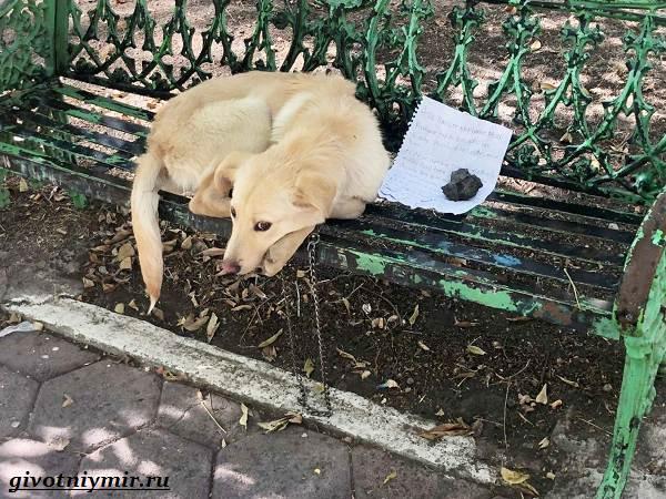 История-о-том-как-на-скамейке-сидел-бездомный-пёс-а-рядом-трогательная-записка-1