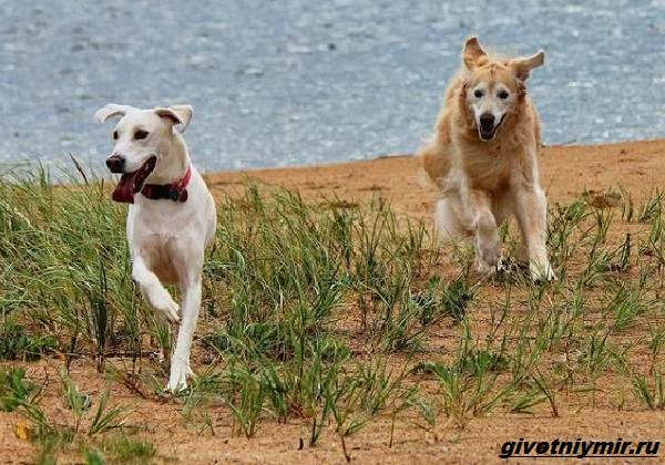 История-о-бездомной-собаке-которая-нашла-любящую-семью-4