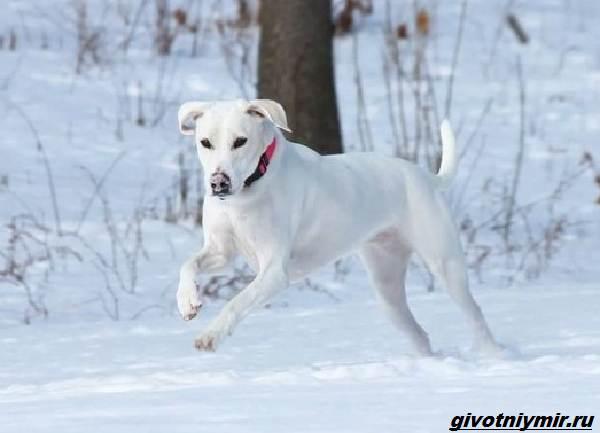 История-о-бездомной-собаке-которая-нашла-любящую-семью-5