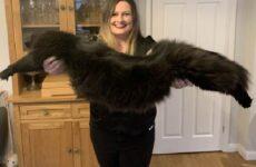 История о двух котах, размер которых удивляет. Люди не верят, что они такие огромные!
