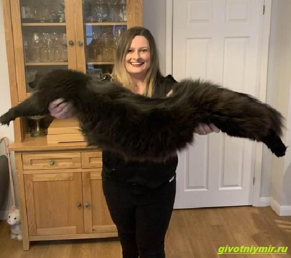 История-о-двух-котах-размер-которых-удивляет-Люди-не-верят-что-они-такие-огромные!-4