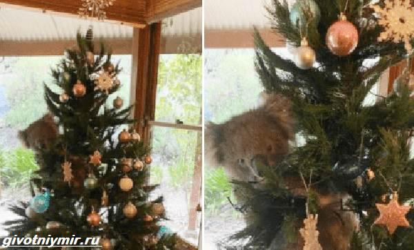История-о-коале-и-новогодней-ёлке-2