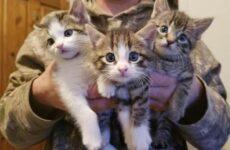 История о кошке, которая принесла к дому трех котят, а вскоре появились еще четыре