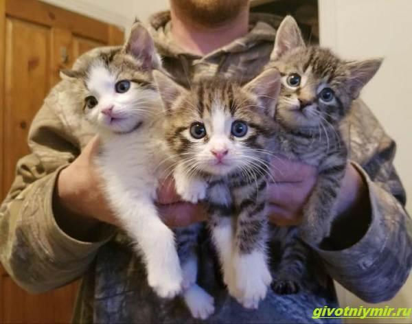 История-о-кошке-которая-принесла-к-дому-трех-котят-а-вскоре-появились-еще-четыре-1