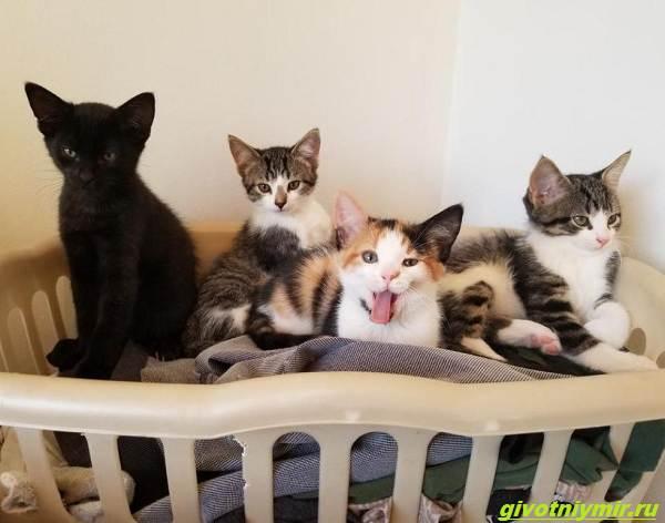 История-о-кошке-которая-принесла-к-дому-трех-котят-а-вскоре-появились-еще-четыре-3