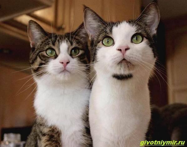 История-о-кошке-которая-принесла-к-дому-трех-котят-а-вскоре-появились-еще-четыре-4