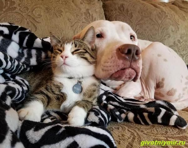 История-о-кошке-которая-принесла-к-дому-трех-котят-а-вскоре-появились-еще-четыре-5