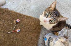 История о кошке, которая ворует чужие вещи и приносит их хозяйке