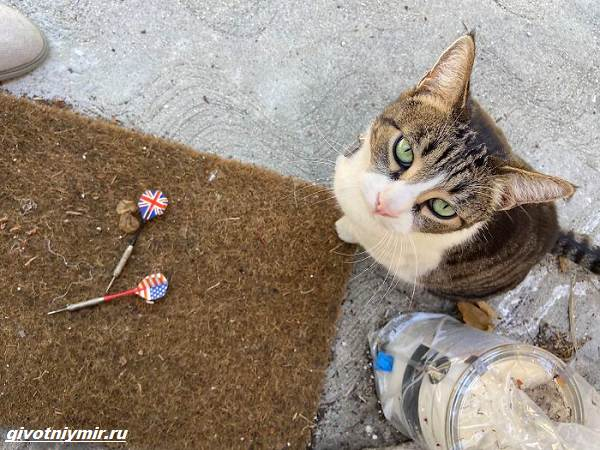 История-о-кошке-которая-ворует-чужие-вещи-и-приносит-их-хозяйке-1