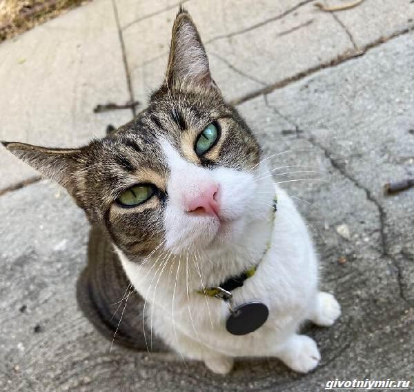 История-о-кошке-которая-ворует-чужие-вещи-и-приносит-их-хозяйке-2