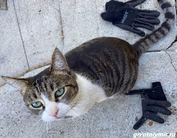История-о-кошке-которая-ворует-чужие-вещи-и-приносит-их-хозяйке-4