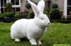 История о кролике-гиганте по имени Джестер