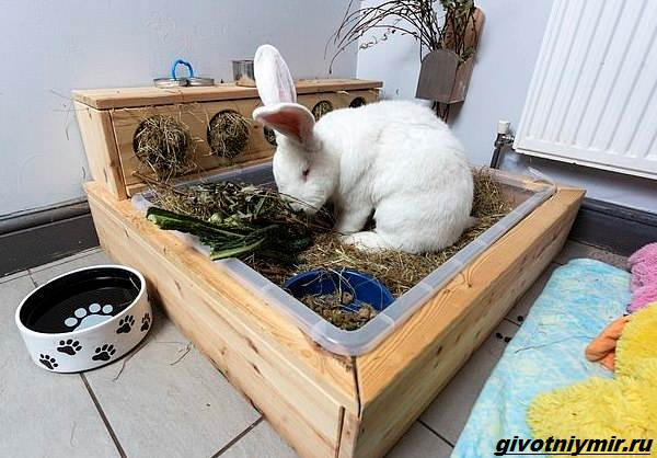 История-о-кролике-гиганте-по-имени-Джестер-2