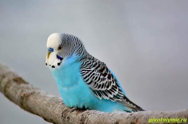 История-о-попугае-который-сам-выбрал-себе-хозяев-1