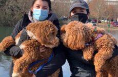 История о собаках, которых разлучила судьба и они случайно встретились в парке